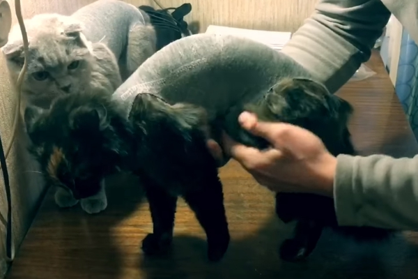 Попон тесно одет на кошку