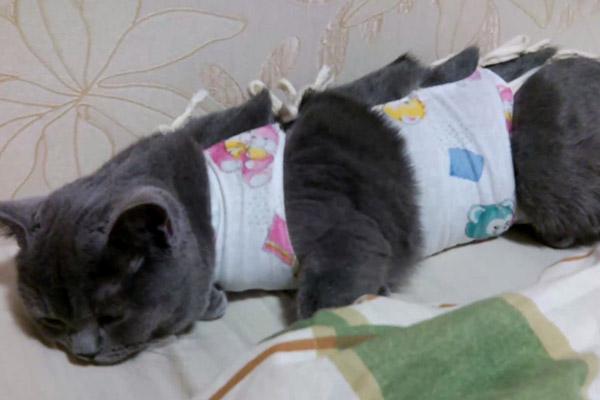 Попона на кошке