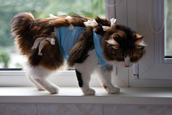Попона на кошке после стерилизации