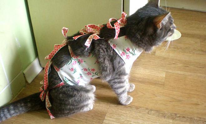 Как сделать для кошки попону