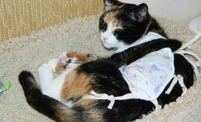 Зачем нужно кастрировать котов и стерилизовать кошек: плюсы и минусы операции