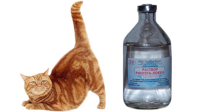 раствор рингера для кошек применение