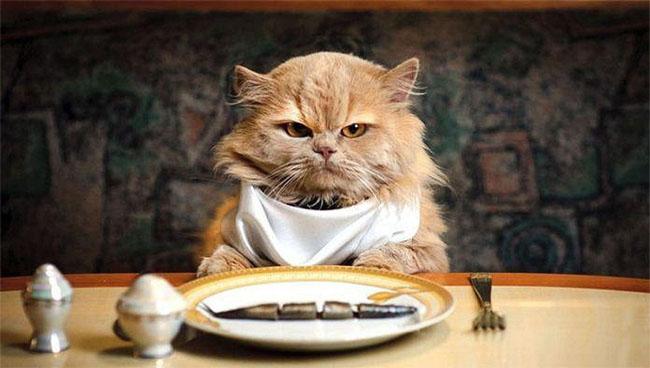 почему кошкам нельзя сладкое