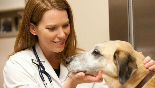 ринит у собаки как лечить