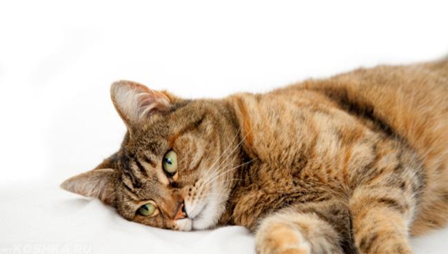 как понять что кошка заболела