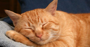 почему кошки мурлыкают, когда их гладишь,
