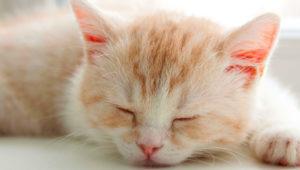 как понять что кот заболел