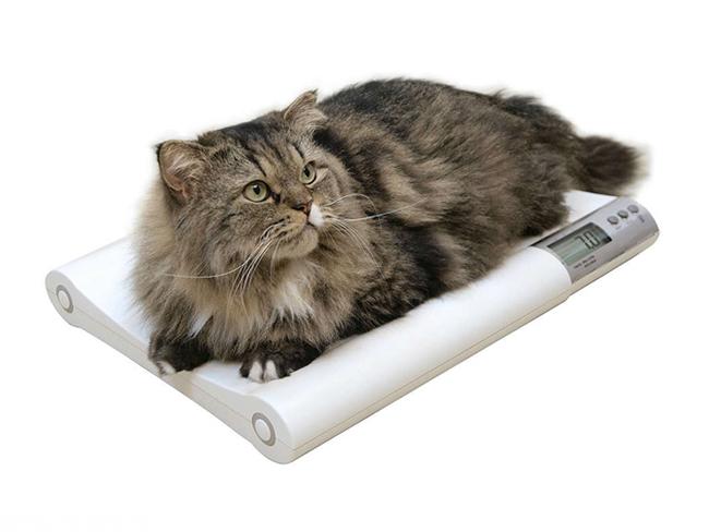 Дозировка протела для кошек