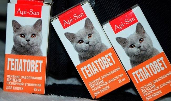 Гепатовет для кошек противопоказания