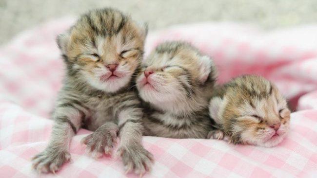 Когда у котят открываются глазки?