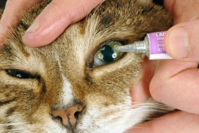 Кератит на глазу у кота лечение