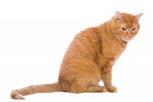Почему кошка катается на попе по ковру что это значит