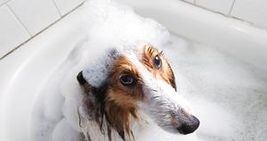 Шампунь для собак с хлоргексидином