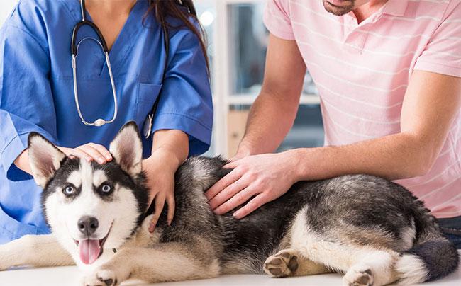 Холестаз лечение заболевания у собак