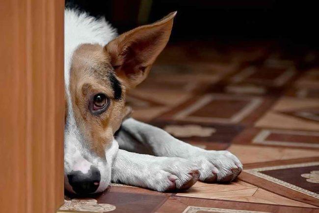 Стоит ли обращаться к ветеринару если собак грызет свои лапы