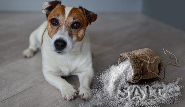 Соль сколько можно давать собаке