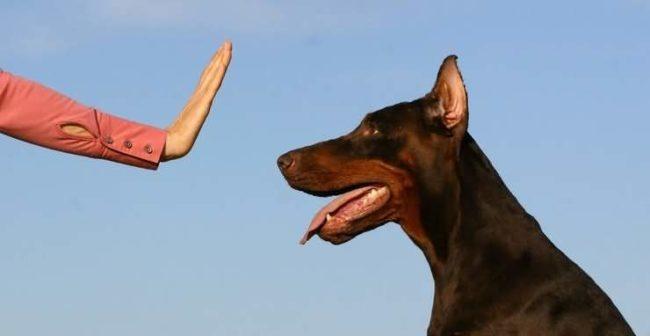 Как приучить собаку команде фу