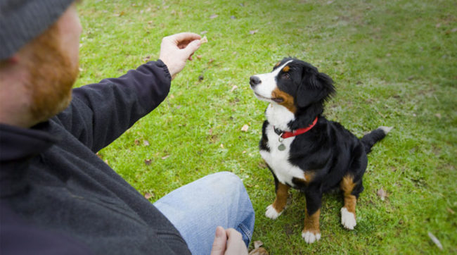 Обучение собаки команде фу
