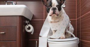 Спрей для приучения собак к туалету