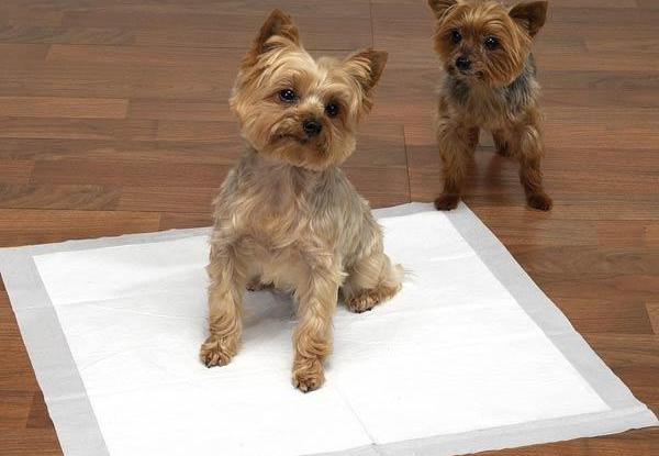 Спрей для приучения собак к туалету как пользоваться