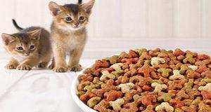 Котенок не ест сухой корм