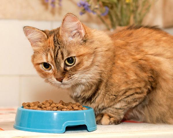 Почему котенок не есть сухой корм