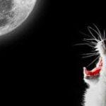 Почему кот орет по ночам?
