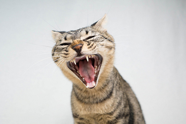 Что делать, если кот орет по ночам?